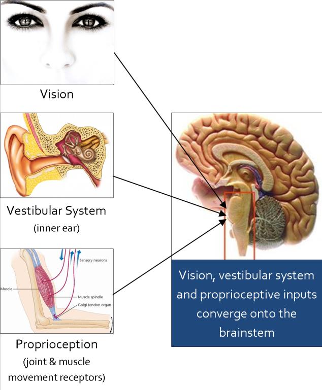 balance-sensory-inputs