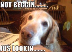 begging-1